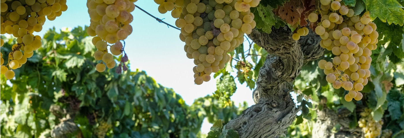 Raise a glass to Spain opening up again in its wine regions