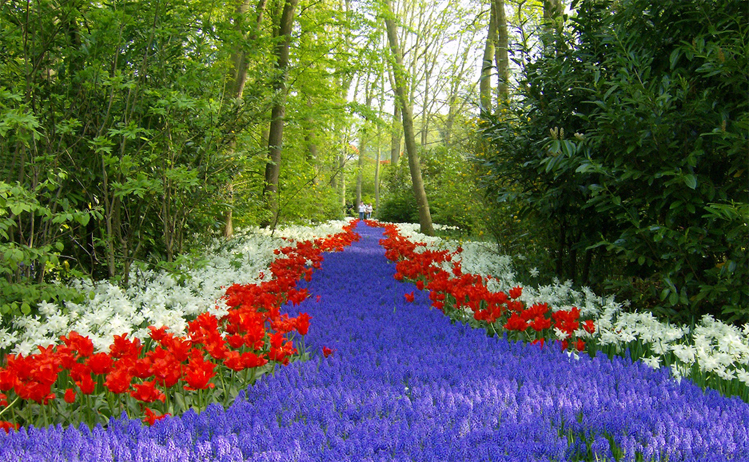 day trips from amsterdam by train - Keukenhof gardens