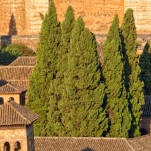 Antequera to Granada